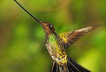 COLIBRÍES / Los colibrí aves tan pequeñas, sin embargo son de un colorido atrayente y hermoso. Agradezco no bajar más de 5 pines por día.  Do not pin more than 5 pins per day. Thanks.
