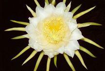 CACTACEAS Y SUCULENTAS / Las flores de las cactáceas son muy bellas y  la planta no requiere de grandes cuidados, pues por su naturaleza conservan humedad. Do not pin more than 5 pins per day.