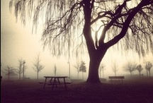 Ool's Weeping Willow