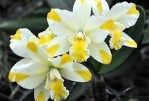 Mesmerizing Orchids / Orchids are so beautiful, and hands down some of the most unique species around. Still I am in awe of them.