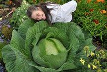 GIANT Vegeteables