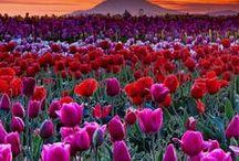 Flower Fields Forever
