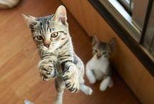 Cats so cute