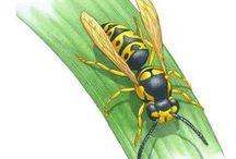 Gardening--Diseases/Pests/Weeds