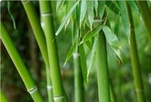 Bamboo | Botanical Bar / #Bamboo, one of the most resilient #plants on the planet, is known for its unparalleled ability to provide instant and long-term moisture. #BotanicalBar