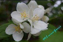 La casa de la primavera / Proyecto fotográfico sobre flores www.lacasadelaprimavera.wordpress.com