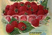 Vampishly vintage   / Vintage flower and vegetable seed packets, catalogues and advertisements.