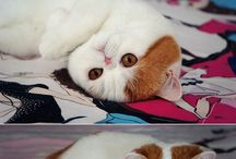 SNOOPY CAT / The fact I have a board dedicated to this cat...