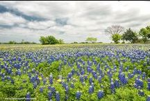 Texas Photos / Photos snapped in the great state of Texas!