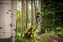 All Things Crested Butte