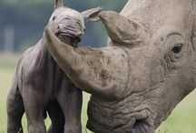My Beautiful Job in Africa• / Conservation and ecology