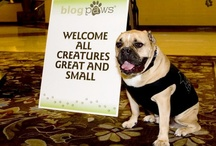 Pet-Friendly Places / Thoughts and ideas for pet-friendly communities. / by Apartment All Stars