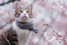 Animals Galore! かわいい!!