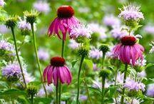 Gardening/Country Life