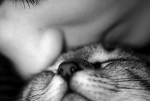 i love animals <3