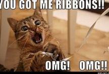 kitties, kitties, kitties!!!