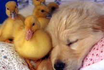 All things cute and fuzzy / Love animals! / by Stephen Clendenin