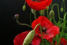 Favorite Flowers / Beauty love simplicity flowers petals