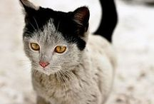 Cats Cats Cats Cats / I love cats