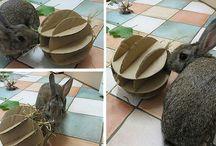DIY for bunnies / DIY rabbit toys, treats ect