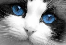 Meow Meow Kitty Kitty!
