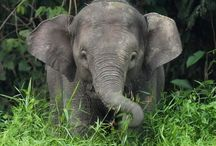 Animals } Elephants are Wonderful! / I love them / by Mary O'D.