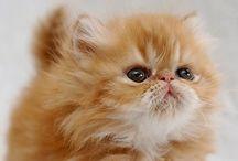 Cute / Cuteness overload!!!