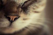 """Chats ♥ / """"Le moindre des petits félins est déjà en lui-même un vrai chef-d'oeuvre."""" Léonard De Vinci"""