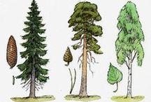 Metsä / Puut