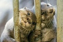 Otters! 2.0 / by Carrie Cat