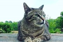 Kewee & les chats / Notre belle Kewee nous a quittés le 21 juin 2016. Elle laisse un immense vide mais les souvenirs heureux avec elle resteront gravés à jamais #AmourDeKewee