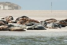 WERELDERFGOED / In 2009 werd de Waddenzee door de Unesco uitgeroepen tot World Heritage (Wereld Erfgoed).  De wadden vormen het grootste ononderbroken systeem van zand- en slikplaten ter wereld met een grotendeels ongestoorde natuurlijke dynamiek. Er is een gevarieerde en zeer specifieke flora en vegetatie. Dit gebied is pleisterplaats voor ten minste 52 populaties van 41 trekvogelsoorten. Je vindt er twee soorten zeehonden (de gewone en de grijze).  We zijn er zuinig op en genieten!