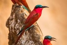 Birds Of A Feather... / by David Wiegand