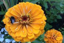 Garden - Piha