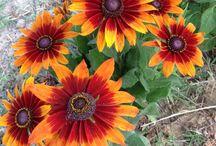 **PIANTE E FIORI** / composizioni di piante grasse,di fiori e altro