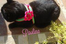 MAGLIA per ANIMALI / Tutto quello che possiamo realizzare a crochet,maglia,stoffa e quant'altro per i nostri amici animali