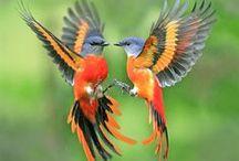 ::  ...CON LE ALI  :: / Uccelli, pinguini, animali da cortile, pipistrelli, ecc...