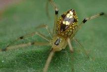 ::  RAGNI & INSETTI  :: / Ragni e insetti del mondo