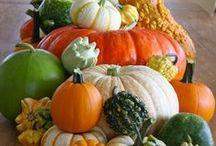 #ZUCCHE# / Zucche strane, decorate,di panno, in crochet e ancora zucche e zucche........