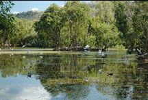Billabong Sanctuary & Bungalow Bay Koala Village / Address:  Bruce Highway, Townsville QLD 4816 Phone:  +61 7 4778 8344 Email:  rangers@billabongsanctuary.com.au Web:  www.billabongsanctuary.com.au / by Qld Ecotourism Directory