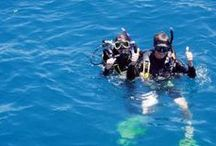 Cairns Dive Centre / Address:  121 Abbott St, Cairns  QLD  4820 Phone:  +61 7 4051 0294 Email:  info@cairnsdive.com.au Web:  www.cairnsdive.com.au / by Qld Ecotourism Directory