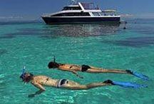 Calypso Reef Charters / Address:  Shop 3, Cnr of Grant & Wamer Streets, Port Douglas QLD 4877 Phone:  +61 7 4099 6999 Email:  accounts@tropicaljourneys.com Web:  www.calypsoreefcruises.com / by Qld Ecotourism Directory