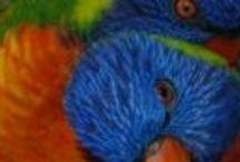 Cedar Park Rainforest Resort / Address:  250 Cedar Park Road, Kuranda  QLD 4881 Phone:  +61 7 4093 7892 Email:  infocedarpark@mac.com Web:  www.cedarparkresort.com.au / by Qld Ecotourism Directory