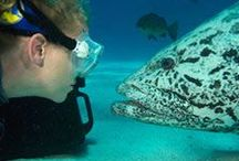 Deep Sea Divers Den / Address:  319 Draper Street, Cairns  QLD 4870 Phone:  +61 7 4046 7333 Email:  info@diversden.com.au Web:  www.takadive.com.au / by Qld Ecotourism Directory