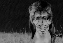 Show me your animal