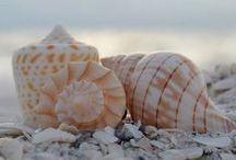 Sea Shells / Beautiful photographs of different seashells.  I collect shells, esp cowries, but this is a random selection of different photographs I found on pinterest, that are so beautiful.