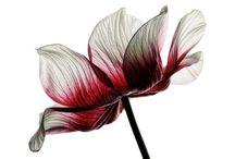Serimonial / Decorações para cerimoniais com flores naturais de época e ornamentação de eventos