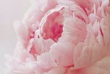 Flowers / Oh Peonies! I Cannot Get Enough of You (and other beauties)