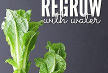 Food Waste / Ways to reduce food waste