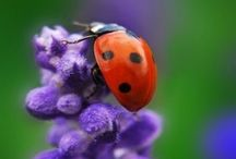 Beautiful Bugs / by Annette